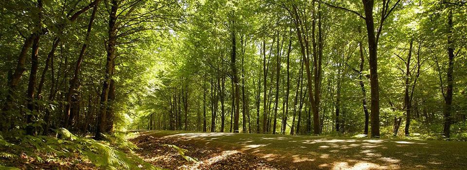 La Forêt de Mervent Vouvant